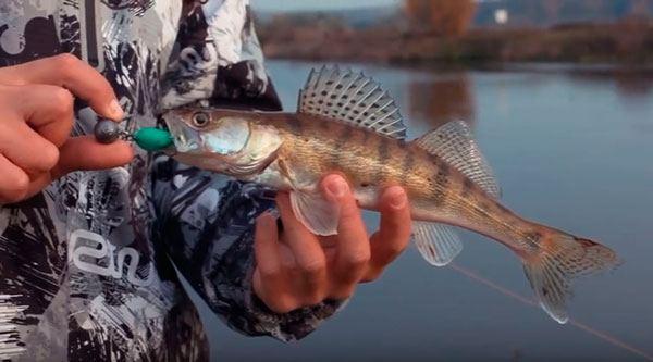 Проводка силиконовых приманок – виды и техника проводки - Рыбалка на спиннинг