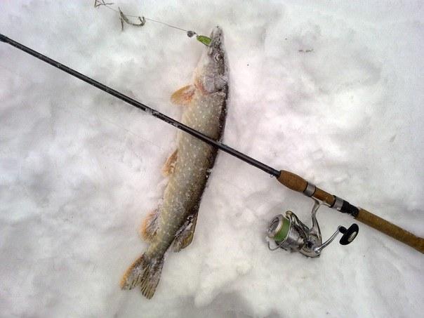 Фото: щука на зимний спиннинг